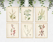 6 Vintage Botanical Prints, Herb Art Prints, Botanical Wall Art, Vintage Prints, Botanical illustration, Printable Wall Art, Greenery Print