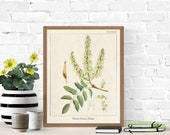 Vintage Botanical Prints,Herb Art Prints,Botanical Wall Art,Vintage Prints,Botanical illustration,Printable Wall Art,Greenery Print