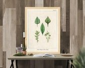 Vintage Herb Prints, Herb Wall Art, Kitchen Herb Printables, Botanical illustrations, Kitchen Wall Art, Kitchen Prints,Vintage Kitchen Decor