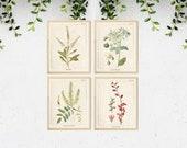 4 Vintage Botanical Prints, Herb Art Prints, Botanical Wall Art, Vintage Prints, Botanical illustration, Printable Wall Art, Greenery Print