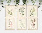 6 Vintage Botanical Prints, Herb Art Prints, Botanical Wall Art, Vintage Prints, Botanical illustration, Printable Wall Art, Greenery Print