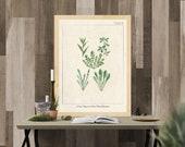 Vintage Herb Prints, Herb Wall Art, Kitchen Herb Printables, Botanical illustrations, Kitchen Wall Art, Kitchen Prints,Vintage Kitchen Decor