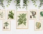 Set of 7 Greenery Prints, Greenery Wall Art, Greenery Decor, Green Wall Art,Botanical illustration,Botanical Print,Foliage Print