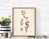 Vintage Botanical Prints, Herb Art Prints, Botanical Wall Art, Vintage Prints, Botanical illustration, Printable Wall Art, Greenery Print