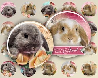 Little Rabbit - circles image - digital collage sheet - 1 x 1 inch - Printable Download