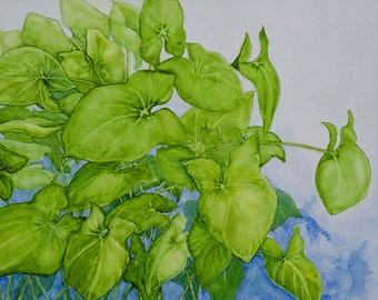 Gratitude for the Sun - Nephthytis, my favorite houseplant. Blank Note Card, with image of original watercolor painting