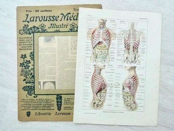 Vintage French Anatomy Print Medical Dictionary Human Body Etsy