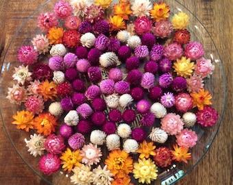 20 Pieces, Dried Flowers, Strawflower, Fall Decor, Strawflowers, Gomphrena, Flowers