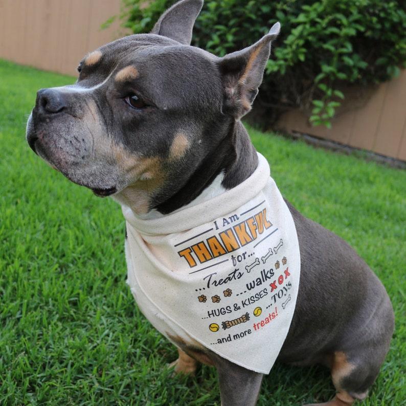 Thanksgiving Dog Bandana Walks Hugs Rustic Fall Pet Attire Thankful for Treats