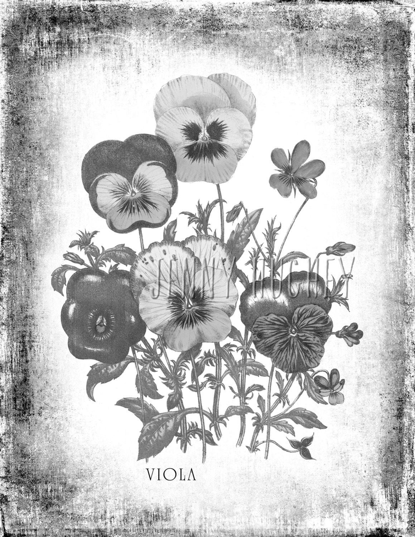 Druckbare Graustufen   Viola Graustufen   Erwachsenen Färbung Blumen ...