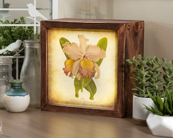 Edison Lightbox | Botanical | Light Box | Table Lamp | Desk Lamp | LED | Lamp | Plants | Flowers | Botany | Orchid