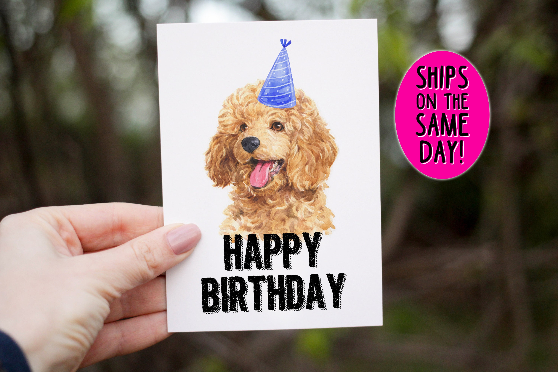 same day shipping toy poodle birthday card happy birthday
