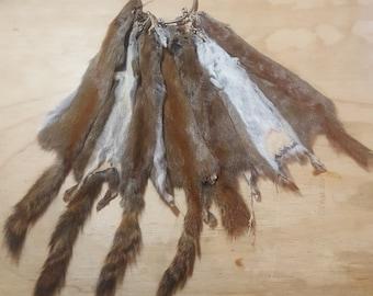 Pine Squirrel Fur Pelt