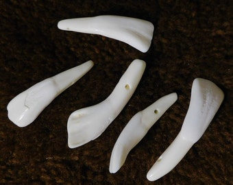 Buffalo Tooth Beads, White (10pc)