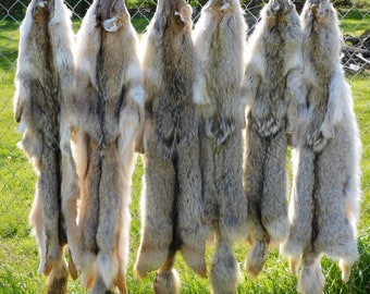 Coyote Fur Pelt