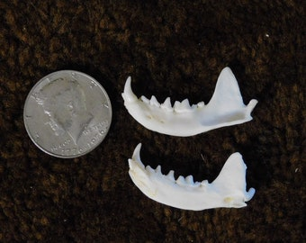Mink Bottom Jaw Set