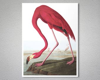 American Flamingo by John James Audubon Fine Art Print  - Poster Paper, Sticker or Canvas Print / Gift Idea