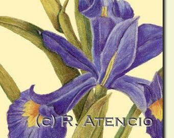 Purple Iris Wall art print  green iris flower mother's day get well  housewarming bright flowers birthday flowers floral spring flowers