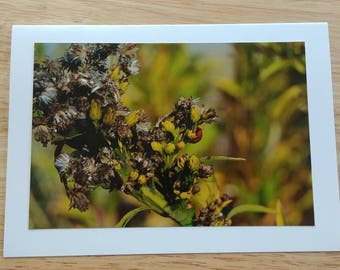 Rehoboth Beach Delaware Ladybug Photo Card
