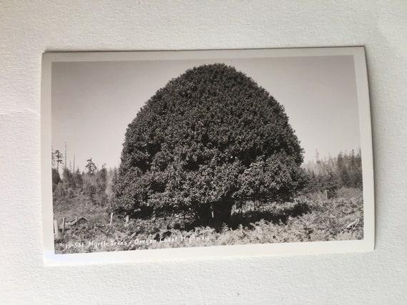 vintage postcard woman sitting among tree roots scene on oregon coast highway