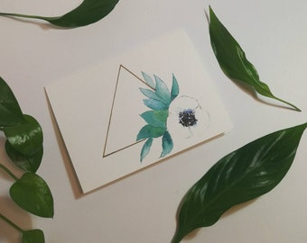 Anemone Cards