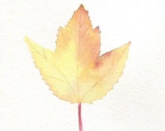 Fall Maple Leaf Card