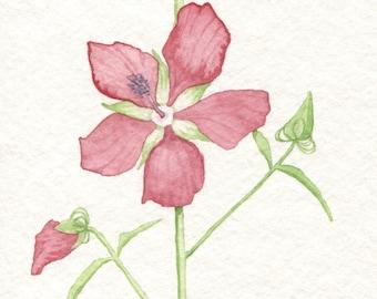 Scarlet Rose Mallow Card