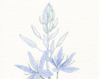 Camas Lily Card