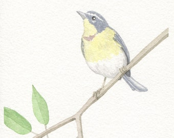 Crescent-Chested Warbler Card