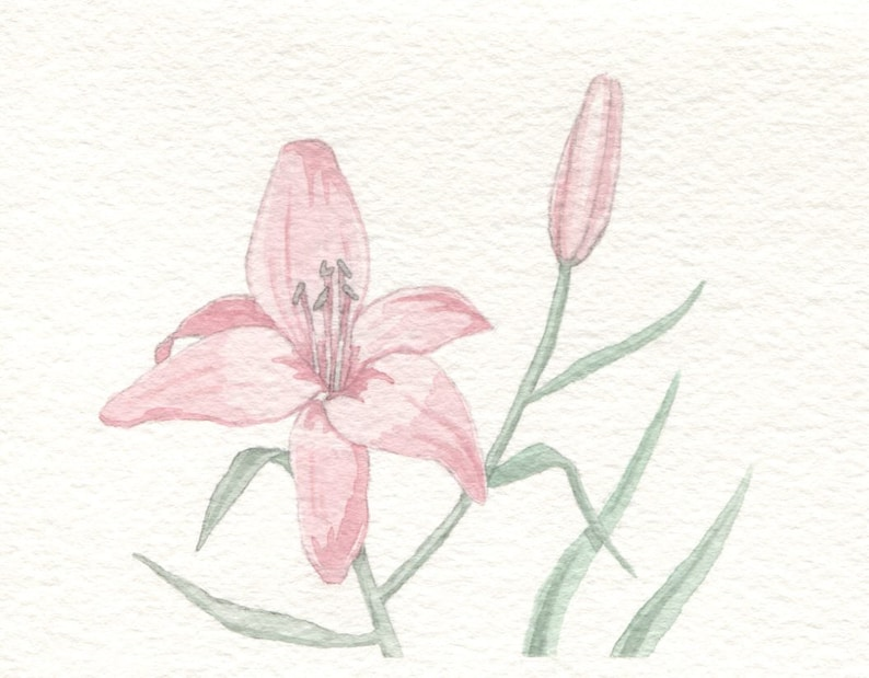 Pink Lily Card image 0