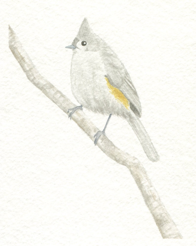 Tufted Titmouse Card image 0