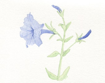Blue Petunia Card