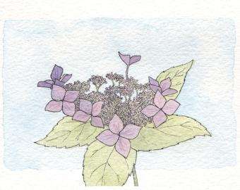 Lace Cap Hydrangea Card