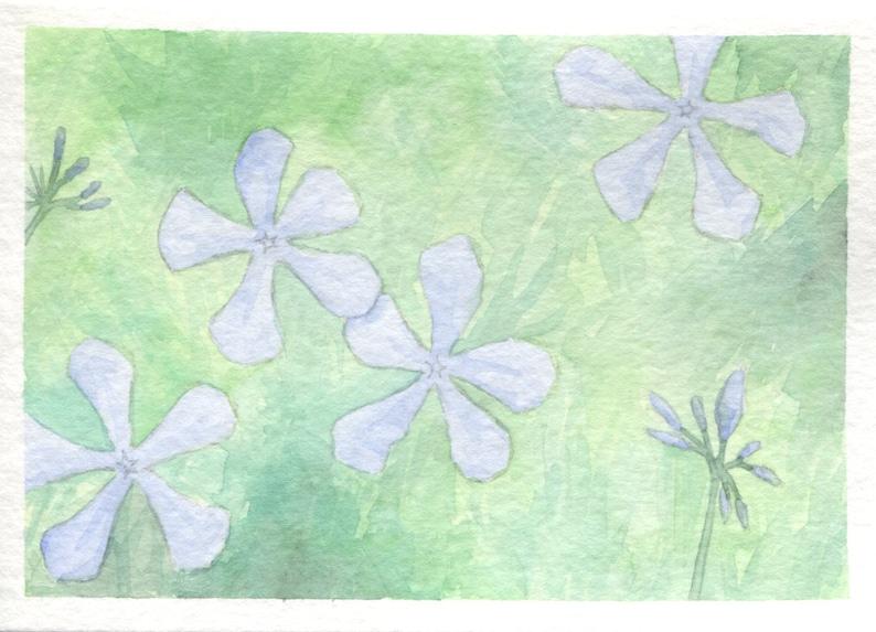 Blue Phlox Card image 0