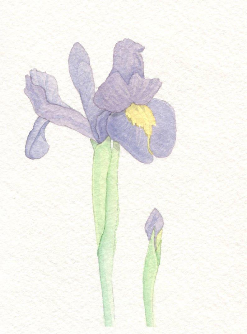 Iris Card image 0