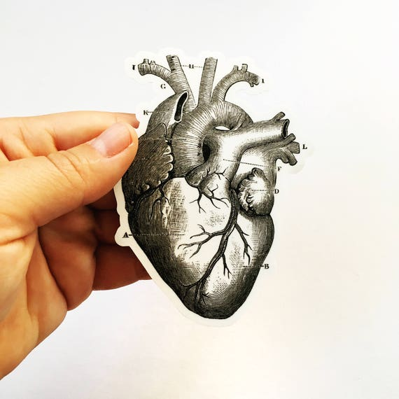 Heart Anatomy Sticker Grays Anatomy Vintage Halloween Vinyl Etsy