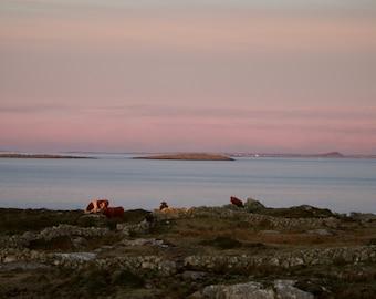 Little Islands Atlantic Ocean Connemara, Cows, Limited Edition Photo, Irish Landscape