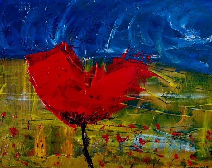 Belgium Poppy
