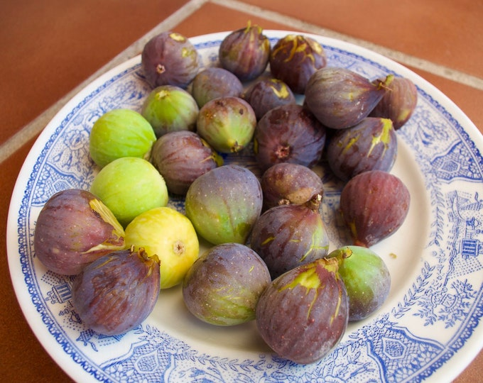 Spanish Figs, Fresh Fruit, Wild Fruit, Foraging, Limited Edition Travel Photo