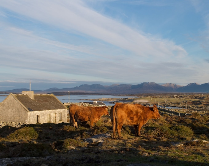 Red Cows On The Hill, Limited Edition, Mountains, Blue Sky, Connemara Landscape