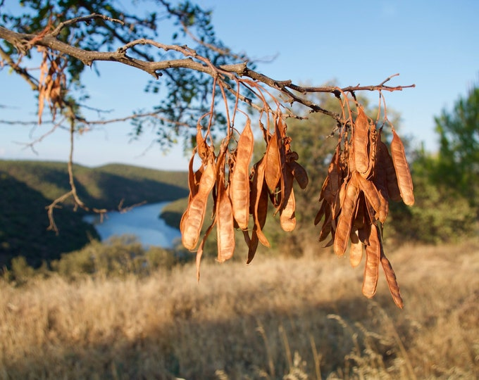 Seeds, Trees, Nature, River, Green Hills, Blue Sky, Limited Edition Photo