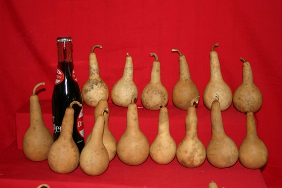 25  Mini Long Handle Dipper  Gourds ( Dried & Cleaned)
