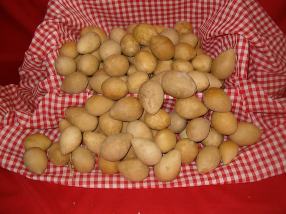 15 Quality LARGE Nest Egg Gourds ( Dried & Cleaned)