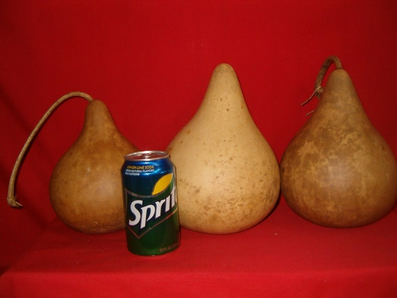 3 -  6 inch  Quality Martin Gourds ( Dried & Cleaned)