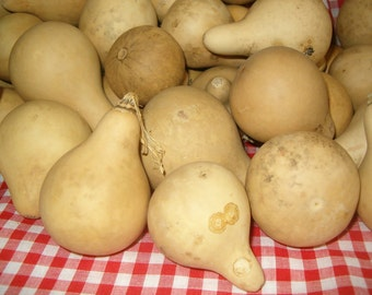 25 Quality Mini Pear Gourds ( Dried & Cleaned)