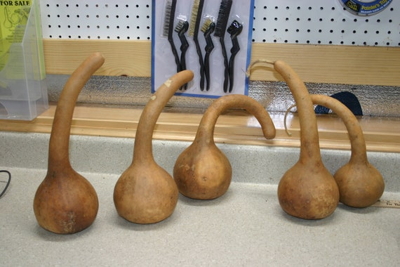 "Special listing for Linda H.  15 short handle dipper gourds of 15"" to 16"" circumference"
