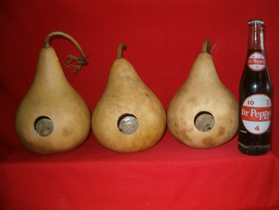Group of 3  -  6 inch  Birdhouse Gourds  Entrance hole 1-1/4 inch