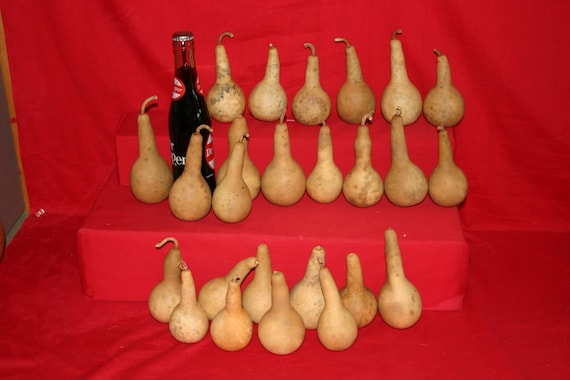 100  Mini Long Handle Dipper  Gourds ( Dried & Cleaned)