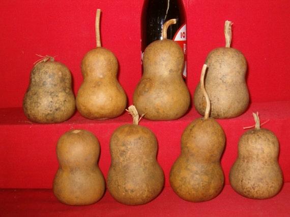 25 Medium Mini Chinese Botttle Gourds ( Dried & Cleaned  )