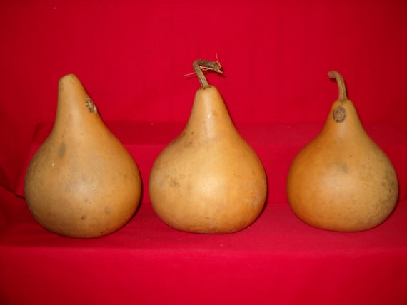 3 -  7 inch 2nd Quality Martin Gourds ( Dried & Cleaned)